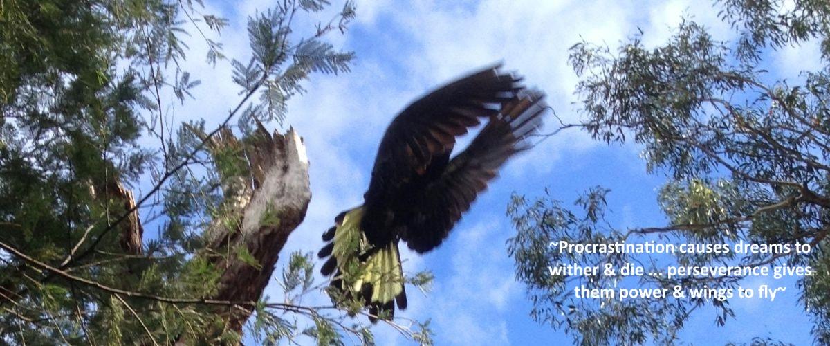 Black Cockatoo 3