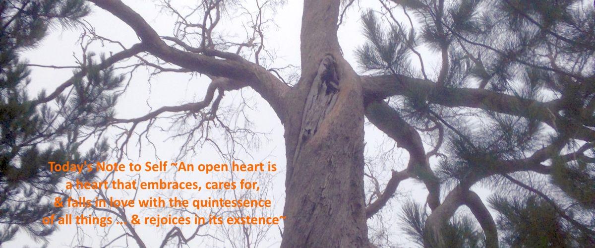 Parrot in tree 2